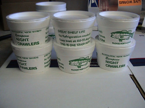 Cupped European Bait Worms