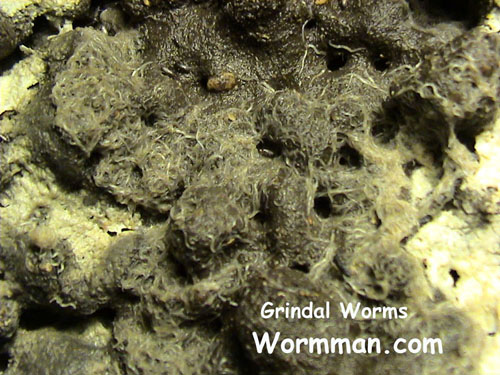 Grindal Worms